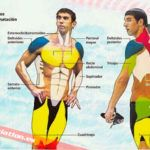 Musculos implicados en el entrenamiento de triatlón en natación