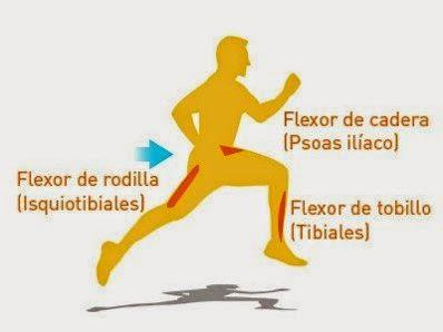 flexibilidad en triatlon